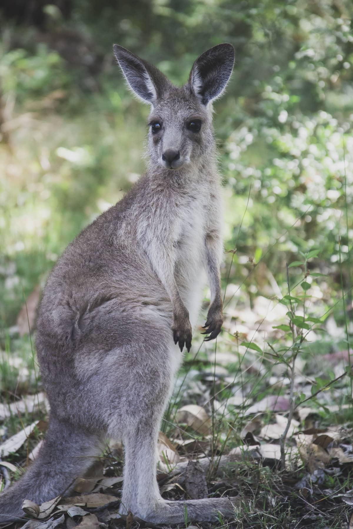 Australia 2010-2014