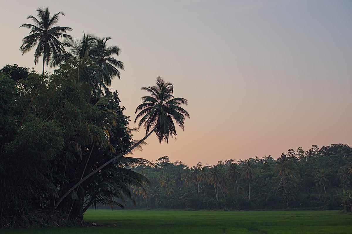 Sri Lanka 2016-2019